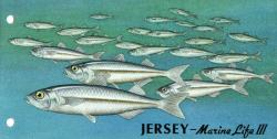 1998 Ocean Fishes pack