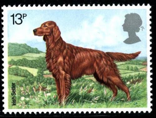 1979 Dogs 13p