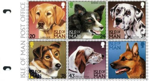 1996 Dogs pack