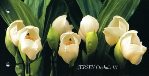 2008 Orchids pack