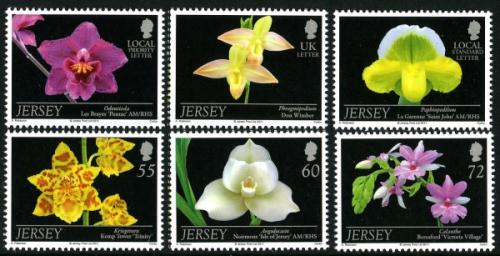 2011 Jersey Orchids 7th serries
