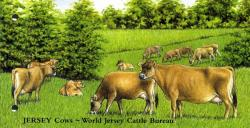 2008 Jersey Cattle Bureau miniature sheet pack