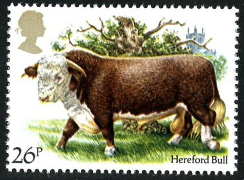 1984 Cattle 26p